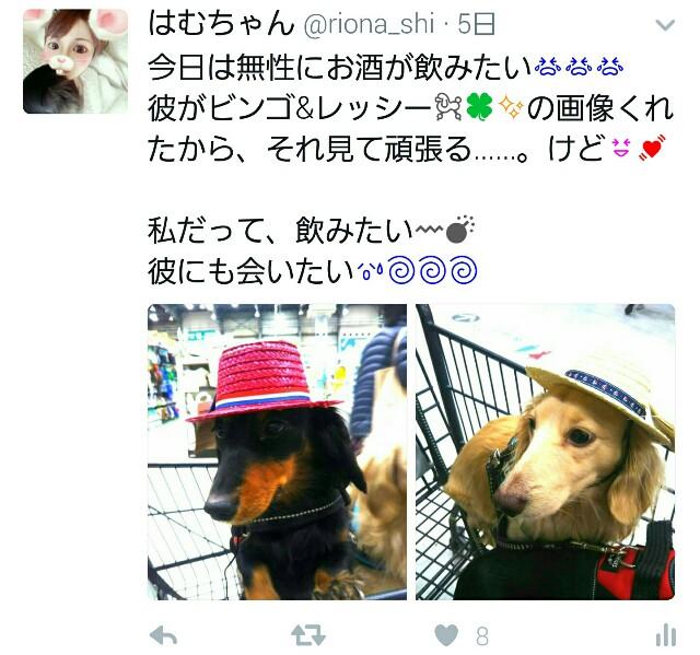 f:id:hamujikun:20170324082351j:image