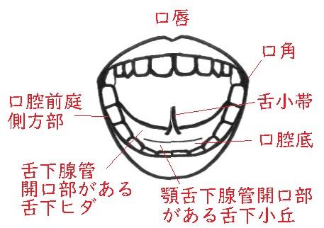 f:id:hana-mode:20200212092737j:image:w200
