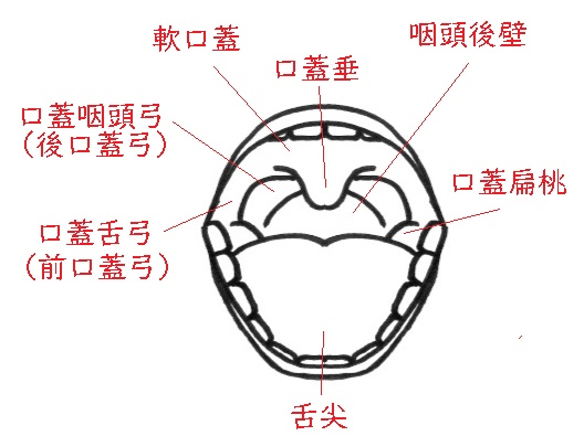 f:id:hana-mode:20200212092743j:image:w200