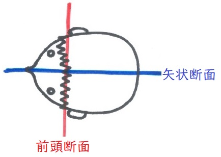 f:id:hana-mode:20200218224614j:image:w200