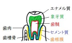 f:id:hana-mode:20200409132358j:image