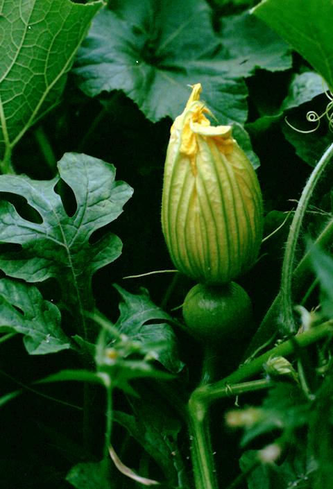 f:id:hana-ni-mizu:20100829235357j:image