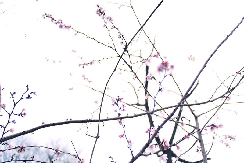 f:id:hana-ni-mizu:20110101160313j:image