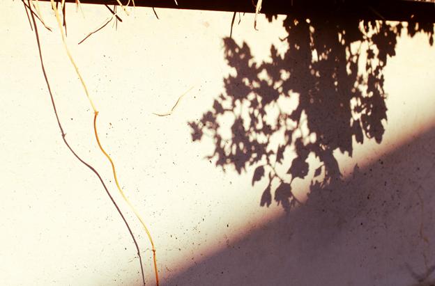 f:id:hana-ni-mizu:20110110145358j:image