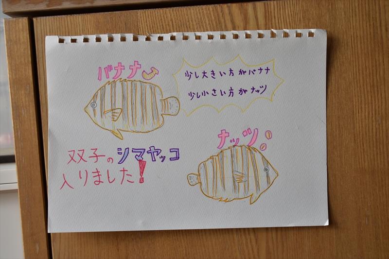 f:id:hana-smile:20161230081311j:plain