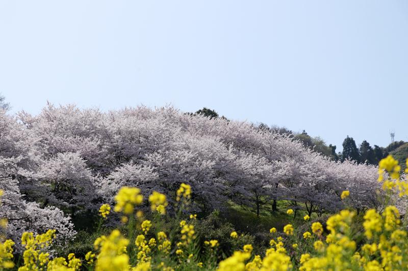f:id:hana-tabi-ki:20180408150324j:plain
