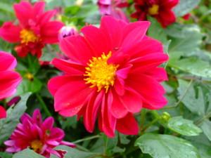 f:id:hana1banchi:20081007094612j:image:left