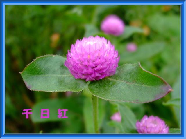 f:id:hana1banchi:20081007134710j:image