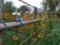 竹垣にコレオプシス 秋深まるやね