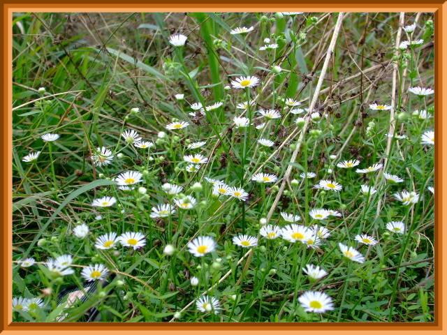 野の花は逞しく美しい