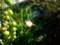 グリーンネックレスの花?小さいね