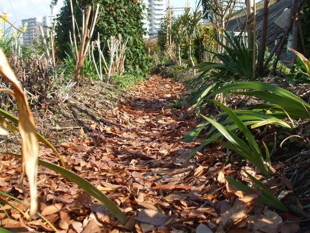 枯葉を敷き詰めた花一番地の小道