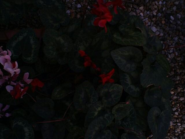 f:id:hana3hana:20170227155236j:image
