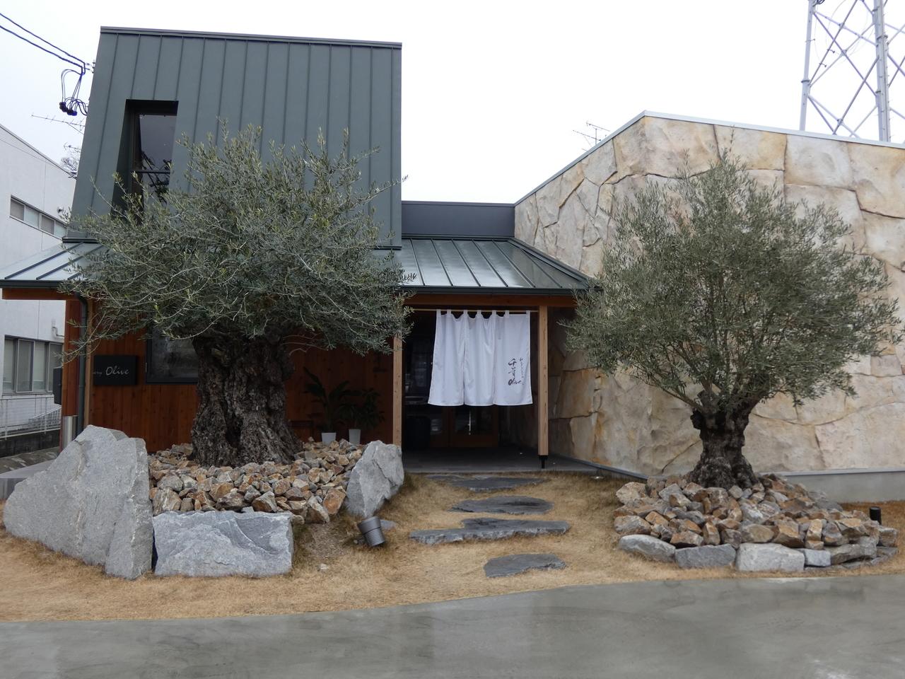 千年Olive オリーブの樹