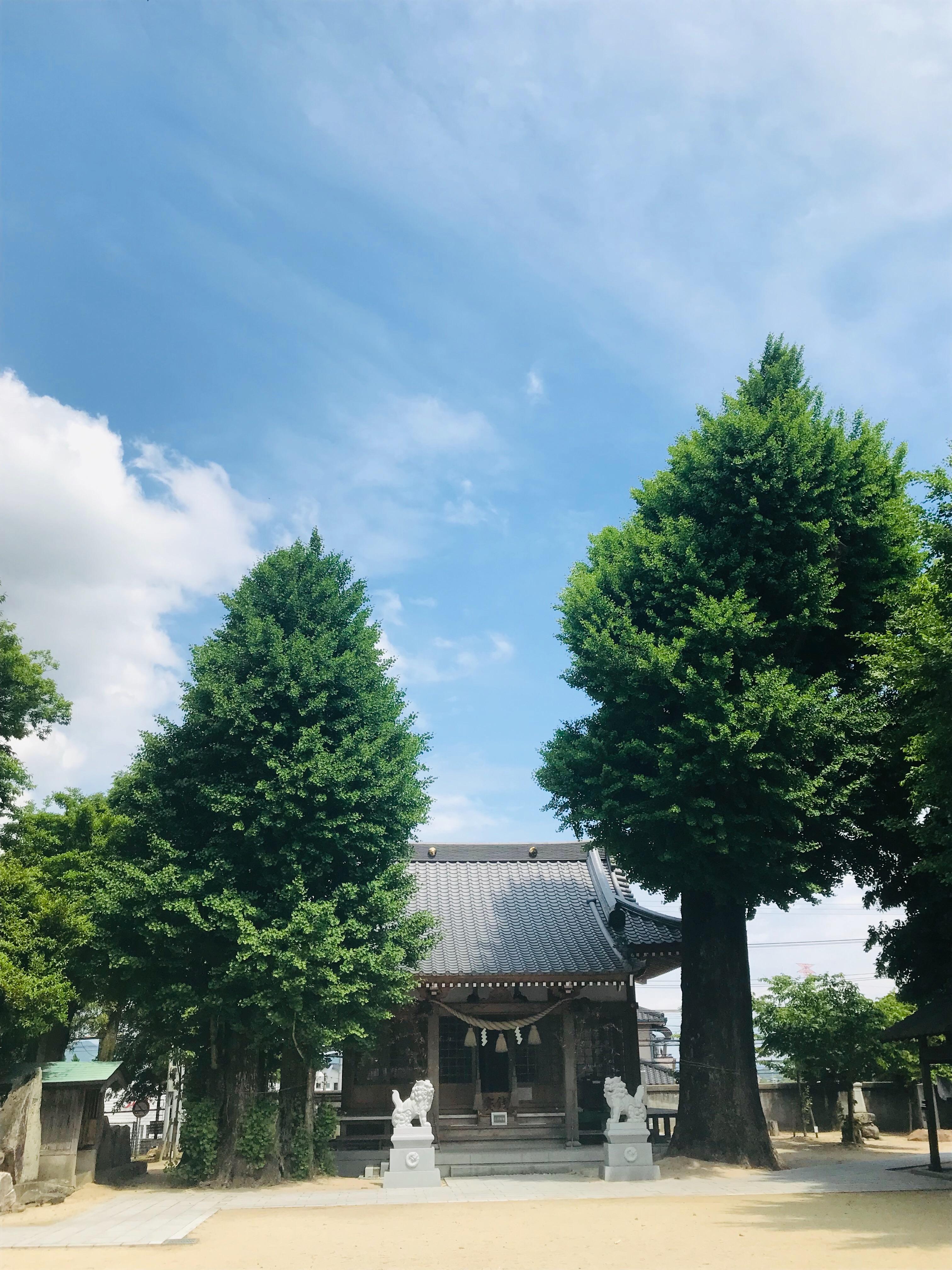 f:id:hana_su-hi:20190516093420j:image