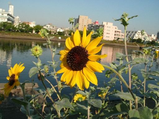 f:id:hanabiranoumi:20130920073548j:plain