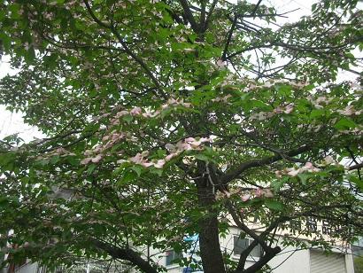 f:id:hanabiranoumi:20170424082248j:plain