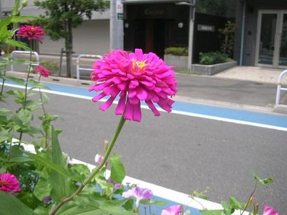 f:id:hanabiranoumi:20170828112945j:plain