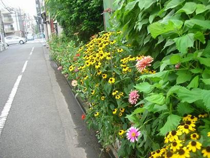 f:id:hanabiranoumi:20180725085834j:plain