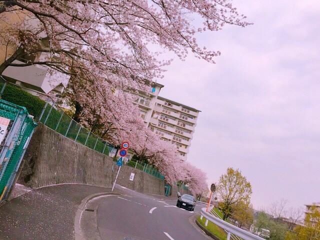 f:id:hanabito2018:20180912080230j:image