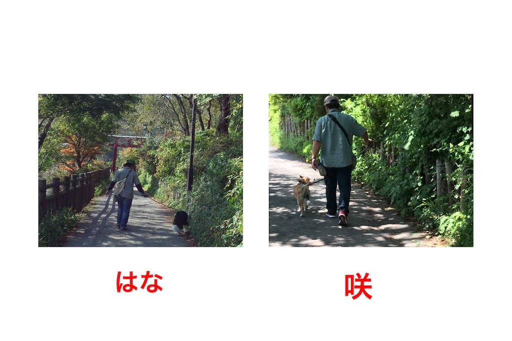 f:id:hanabo39:20180602191523j:image