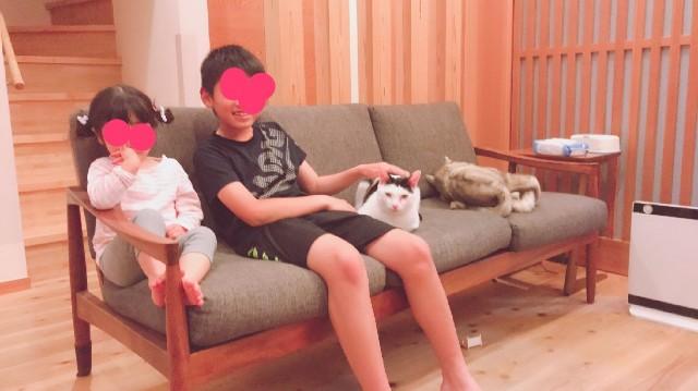 f:id:hanachan3939:20190512065824j:image