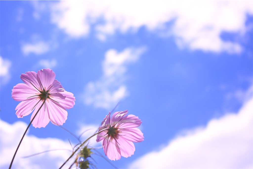 f:id:hanaeuchimura:20161102055326j:image