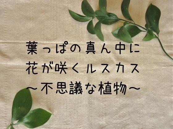 f:id:hanahirako:20200515120943j:plain