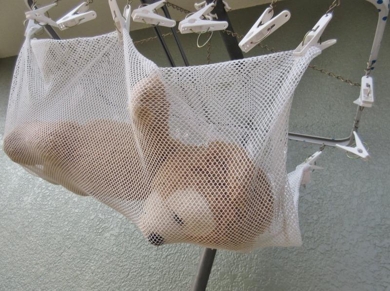 ぬいぐるみの洗い方写真9