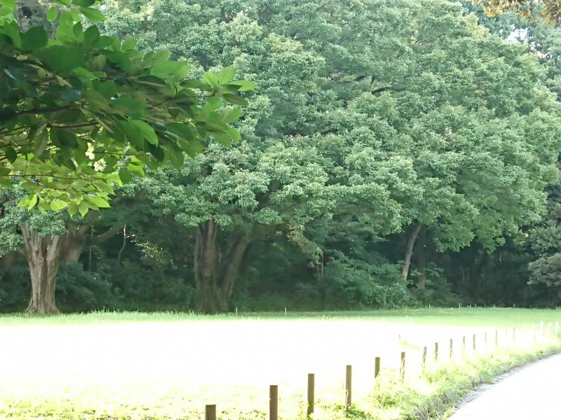 明治神宮の森5