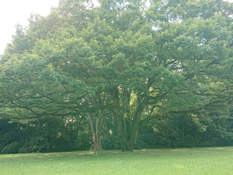 明治神宮の森6