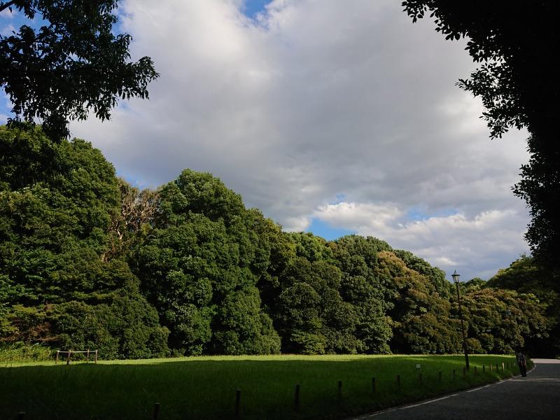 明治神宮の森7