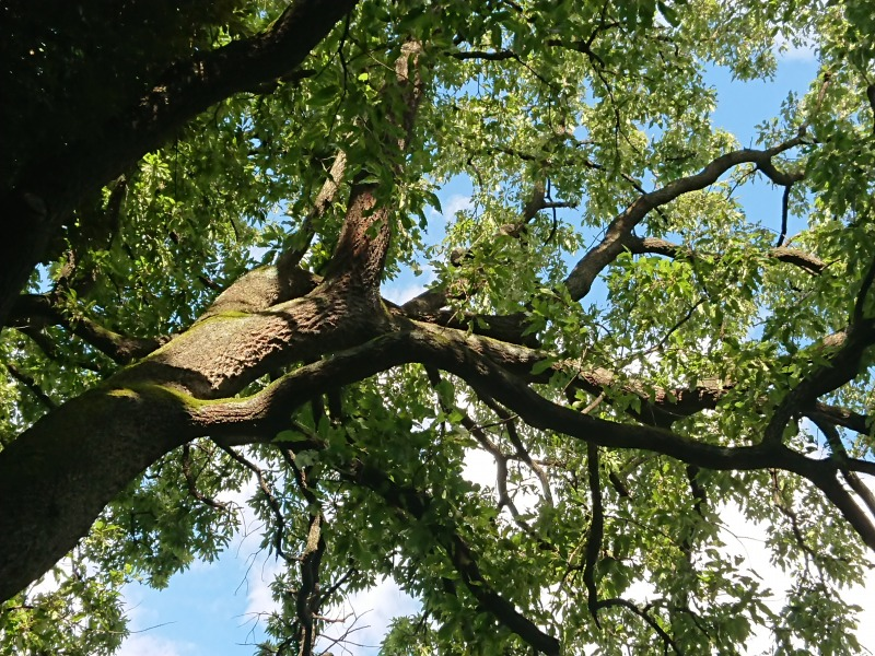 明治神宮の森の木