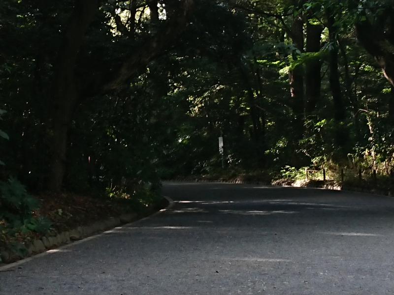 明治神宮の森1
