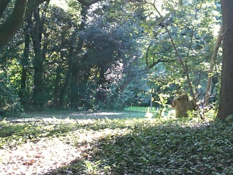 明治神宮の森4