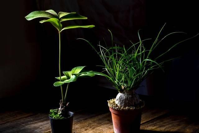 薄暗い空間に置いてある観葉植物