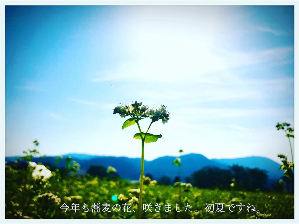 f:id:hanak50kamoto:20180605205014j:image