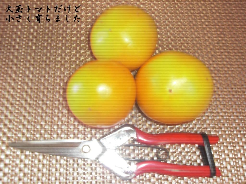 f:id:hanakabu:20160822102351j:plain
