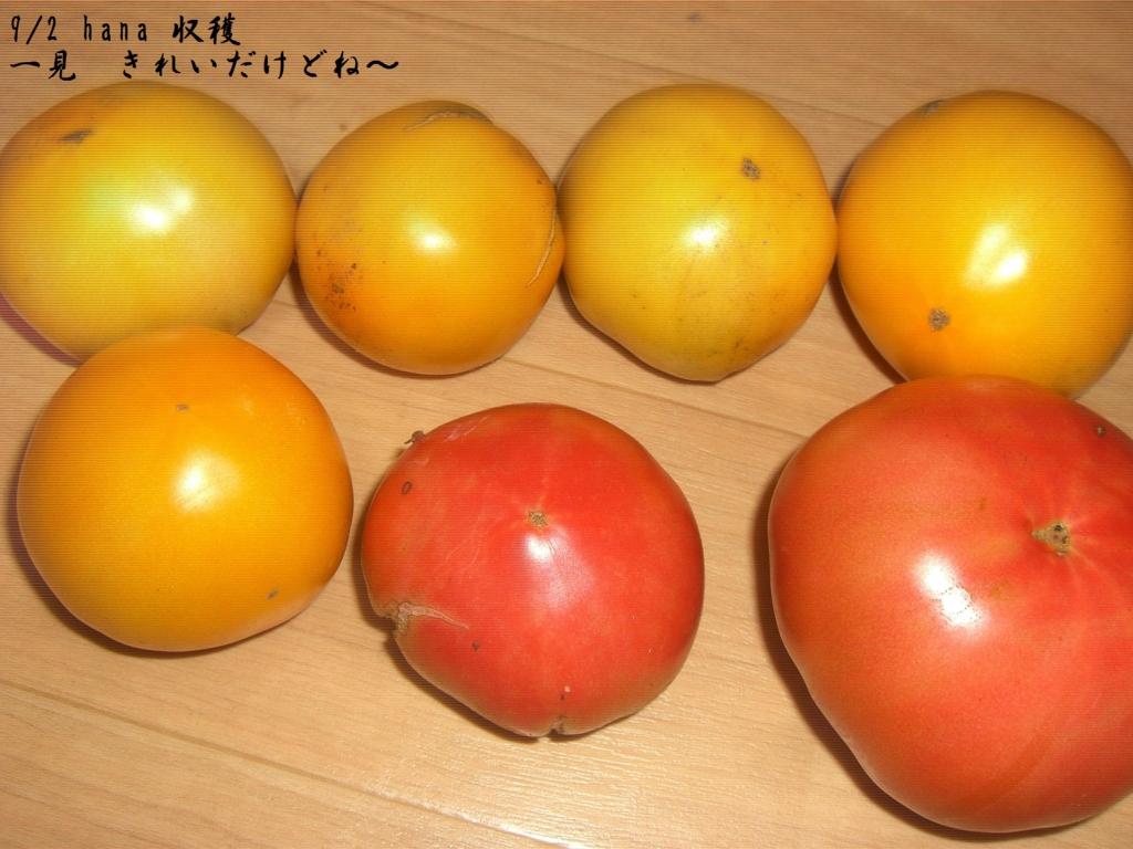 f:id:hanakabu:20160903095355j:plain