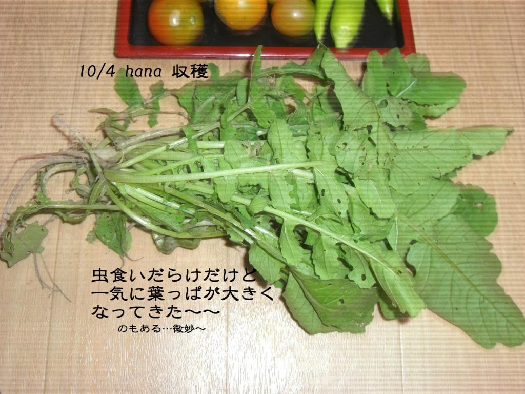 f:id:hanakabu:20161004220143j:plain