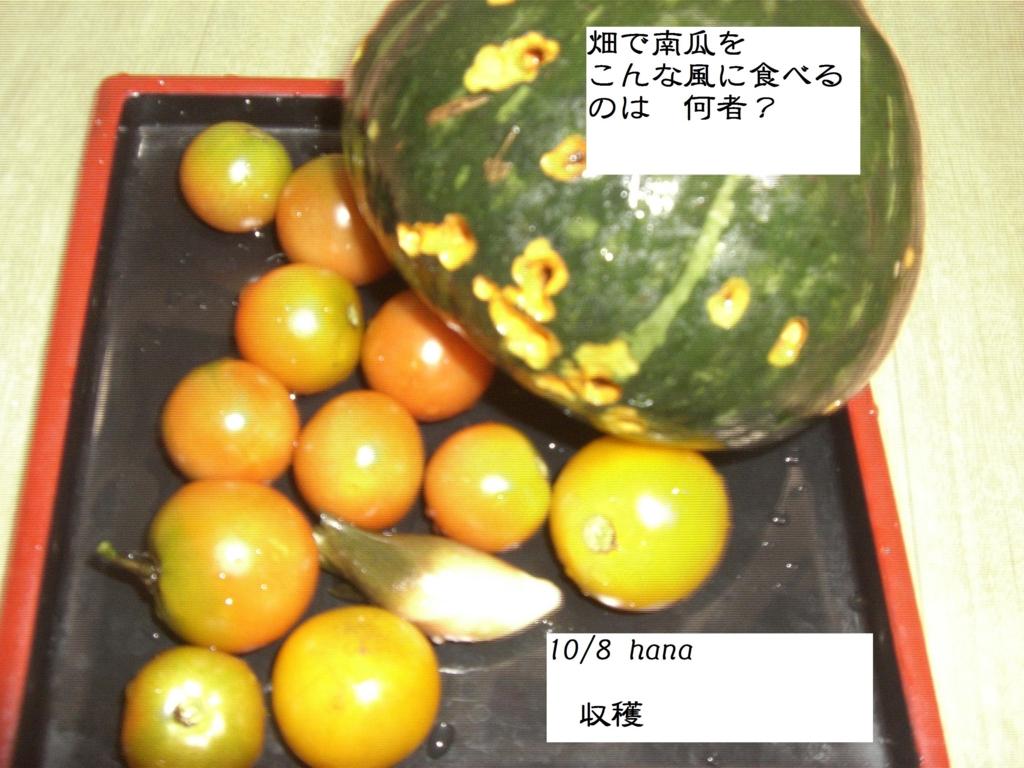 f:id:hanakabu:20161008111710j:plain