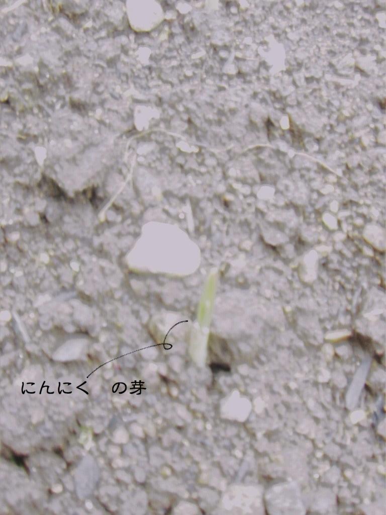 f:id:hanakabu:20161017161017j:plain