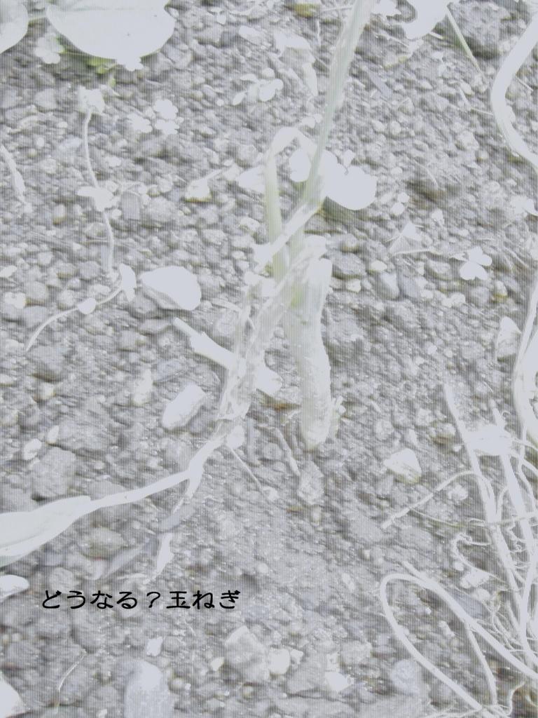 f:id:hanakabu:20161017161225j:plain