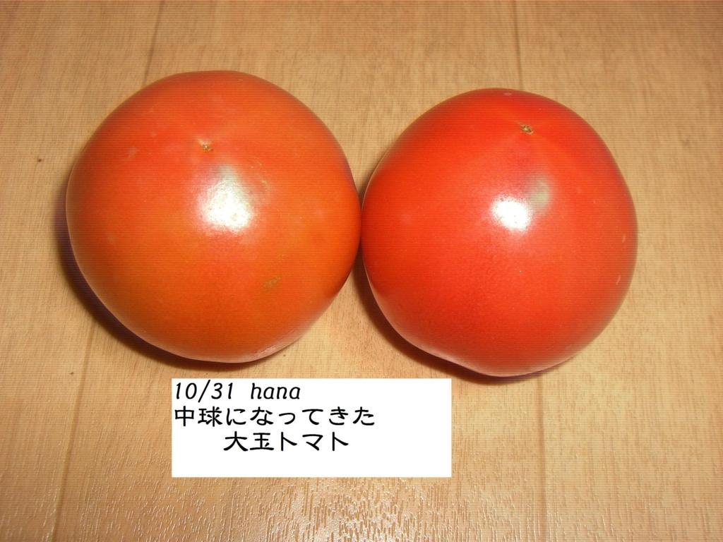 f:id:hanakabu:20161107174821j:plain