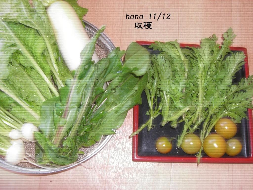 f:id:hanakabu:20161113111531j:plain