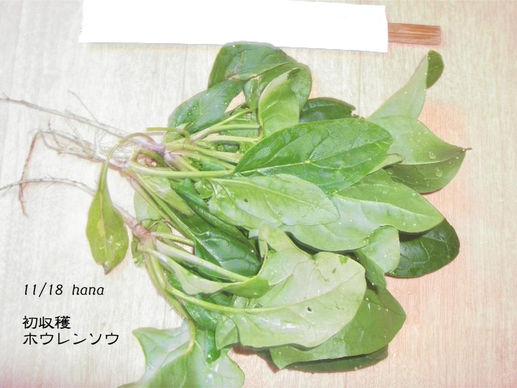 f:id:hanakabu:20161120151549j:plain