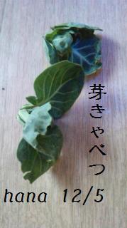 f:id:hanakabu:20161206094120j:plain