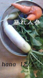 f:id:hanakabu:20161206094919j:plain