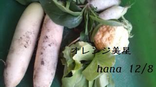 f:id:hanakabu:20161208202619j:plain