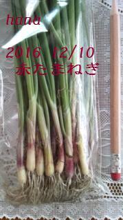 f:id:hanakabu:20161210010042j:plain